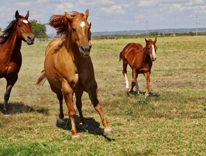 【アメリカ・サンタアニタパーク競馬場】死亡馬多発で無期限閉鎖【3月29日よりレース再開】